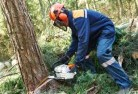 Crowea Tree felling services 21