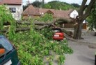 Crowea Tree felling services 41