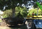 Crowea Tree felling services 4